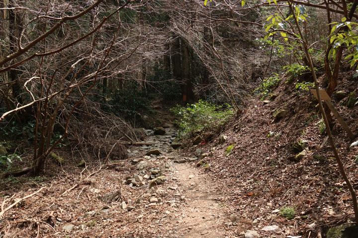 いろはの森コース2.jpg