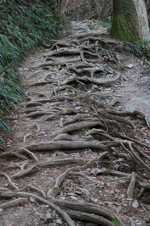 木の根の登山道.jpg