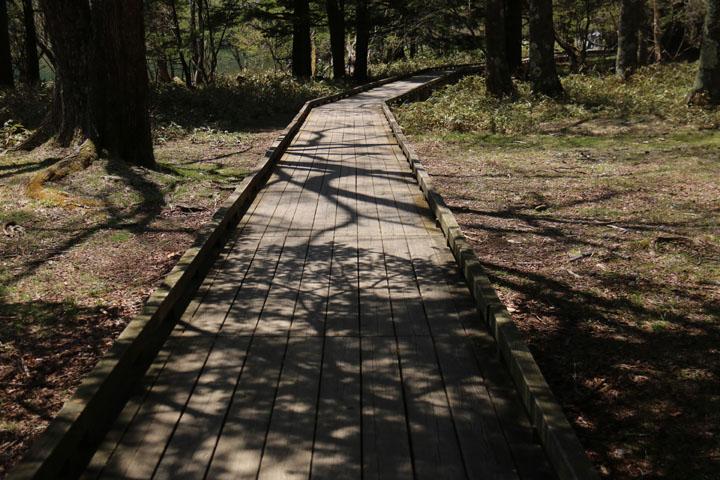 木道と影.jpg