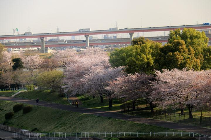 東京桜.jpg
