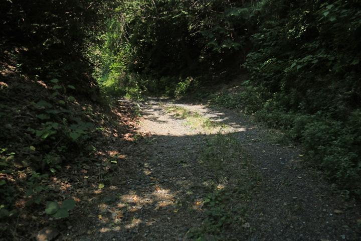 林道歩き.jpg