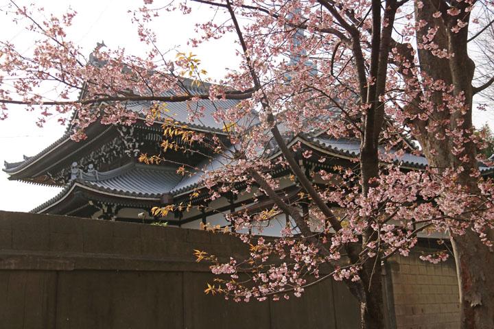 桜とお寺.jpg