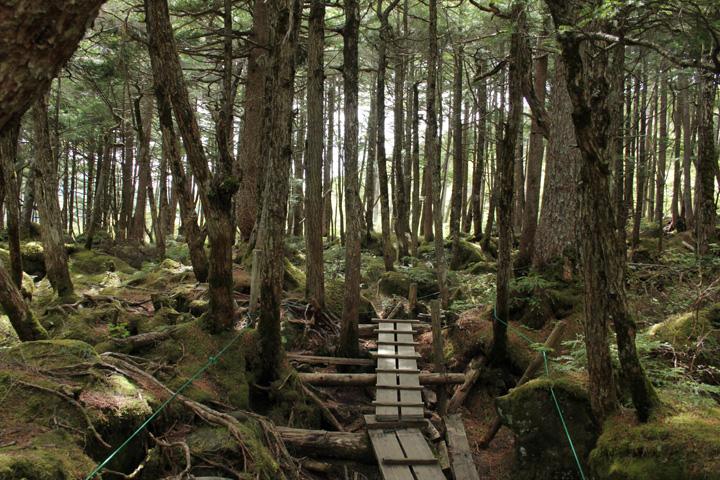 森の中.jpg