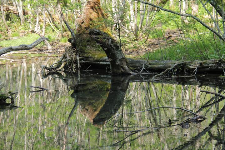 水鏡.jpg