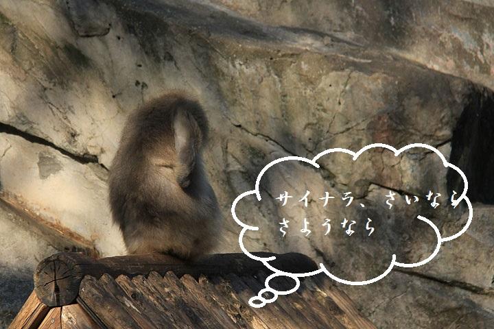 猿3.jpg