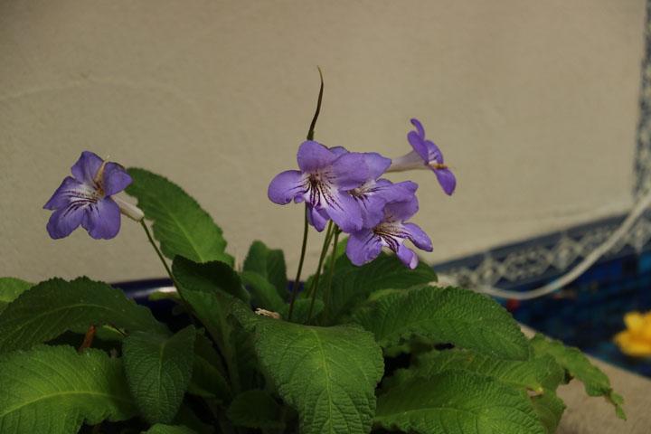 珍しい花.jpg