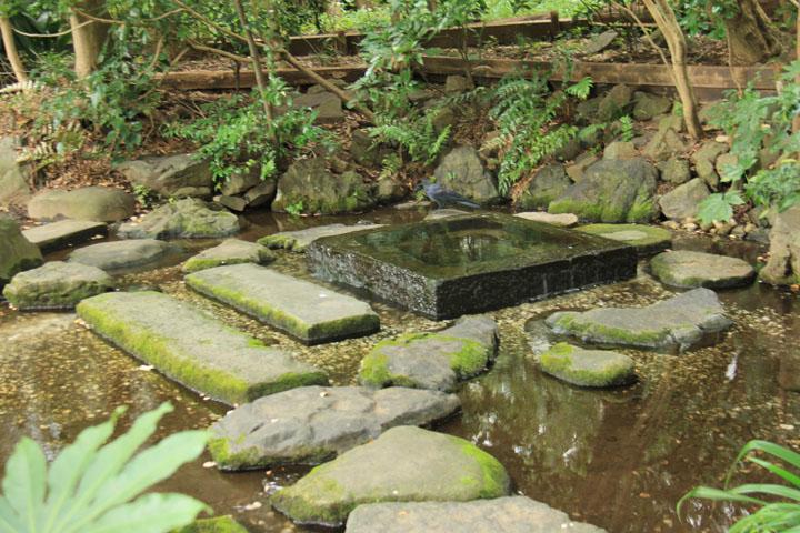 神田上水の源流.jpg