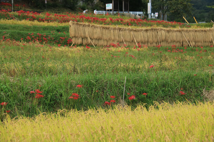 稲架のある風景.jpg
