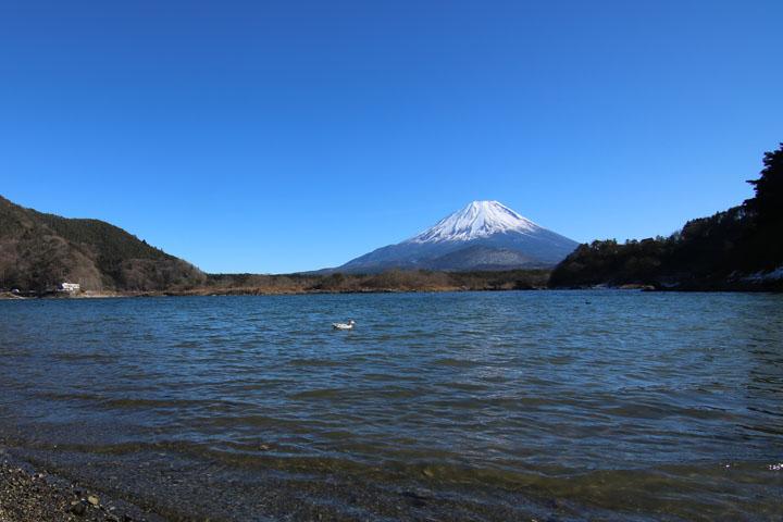 精進湖富士山3.jpg