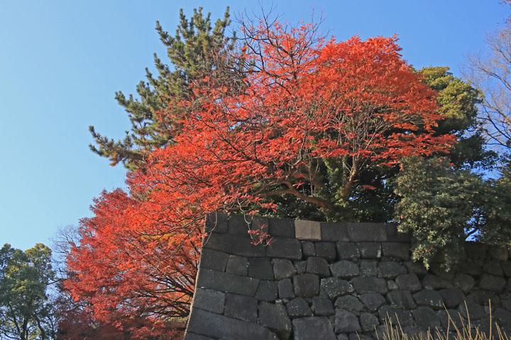 紅葉.jpg
