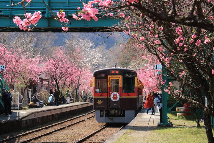 花桃と電車2.jpg
