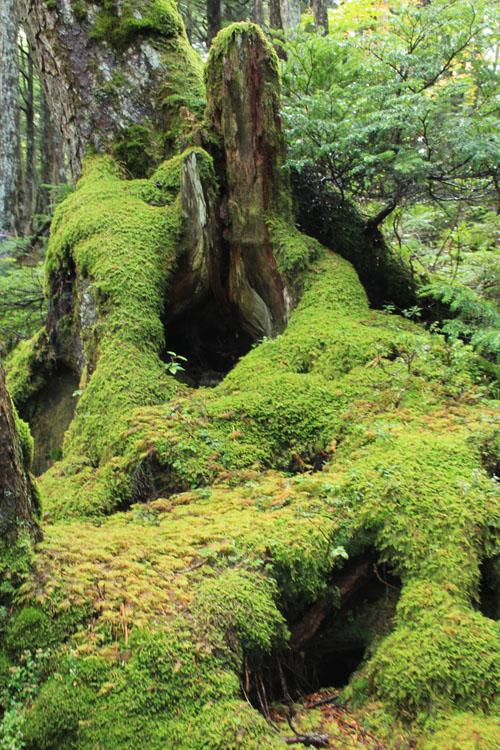 苔の領域.jpg