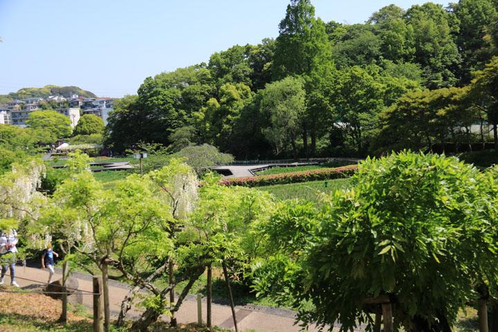 藤棚から菖蒲田.jpg