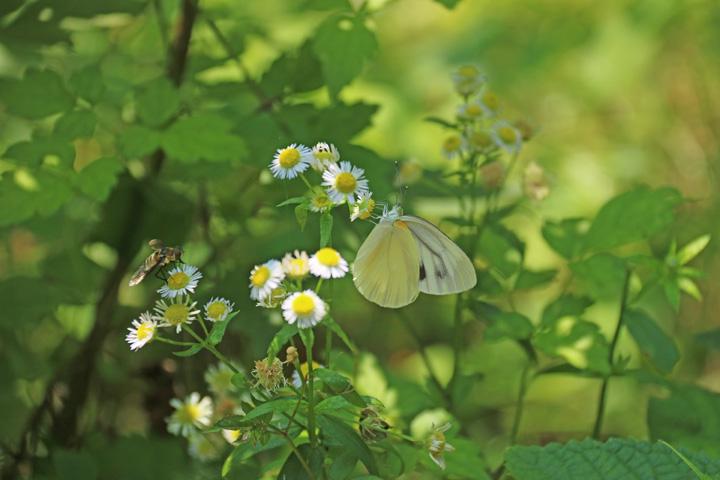 蝶と.jpg