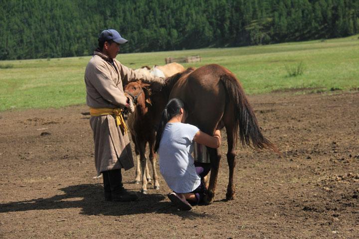 馬の乳しぼり.jpg