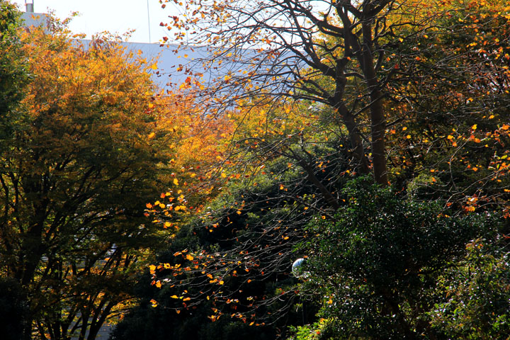 公園の秋.jpg