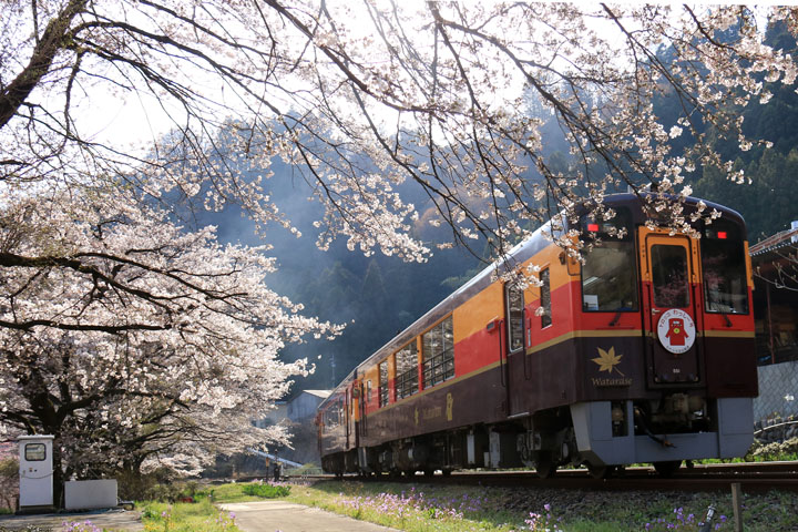 列車と桜2.jpg