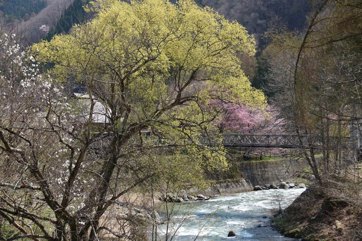 大出の吊橋.jpg