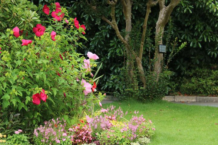 庭の一角.jpg