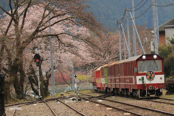 桜とディーゼル2.jpg