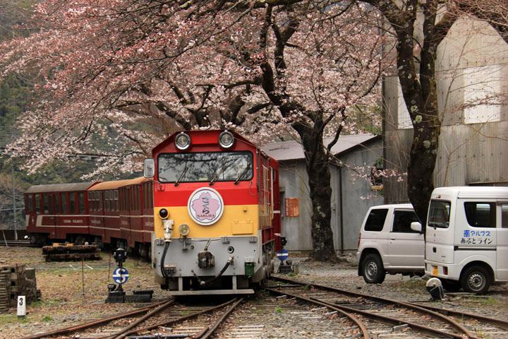 桜とディーゼル3.jpg