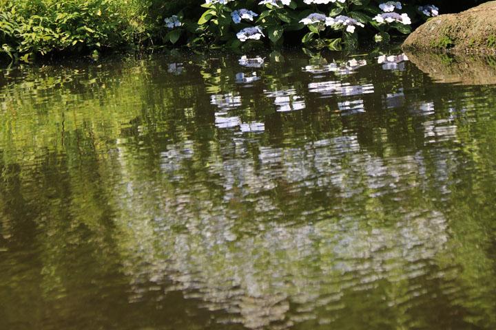水と紫陽花.jpg