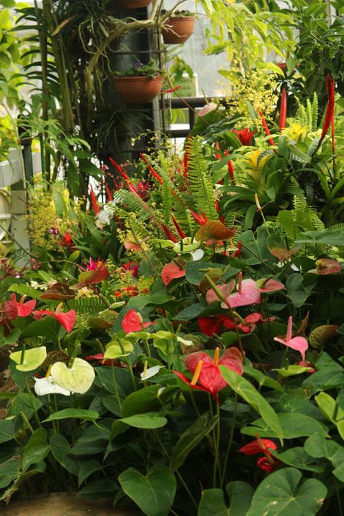 温室の花.jpg