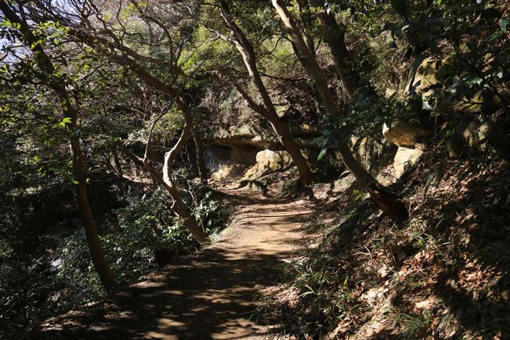 登山道.jpg