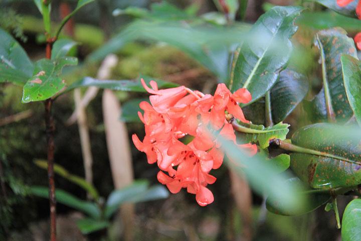 石楠花3.jpg