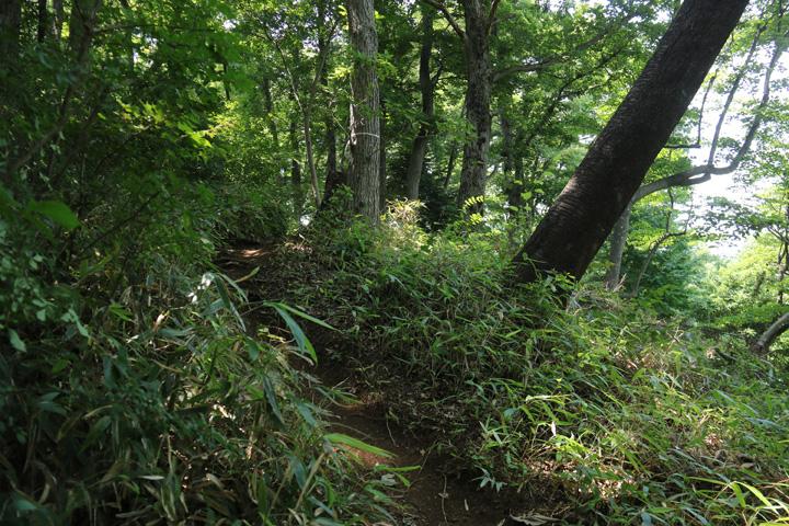 笹薮の道.jpg