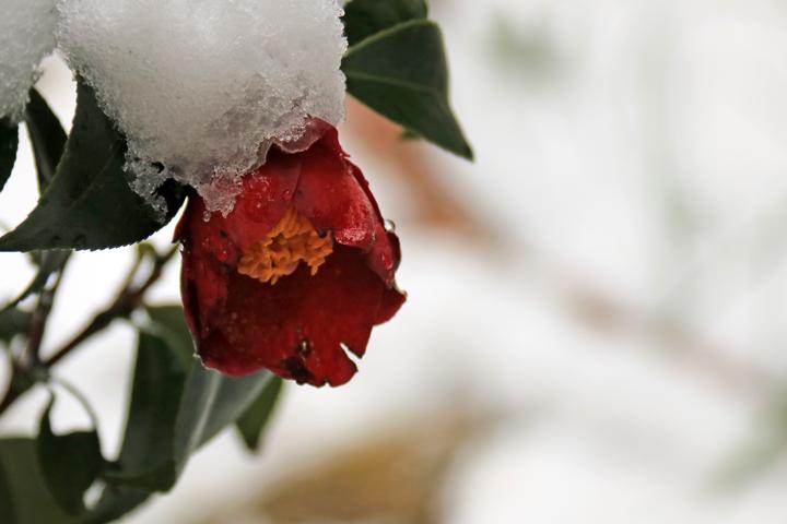 紺秋と雪.jpg