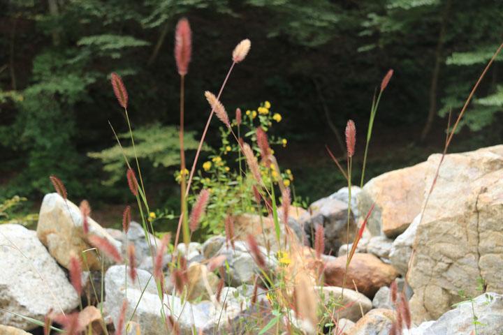 自然の生け花.jpg