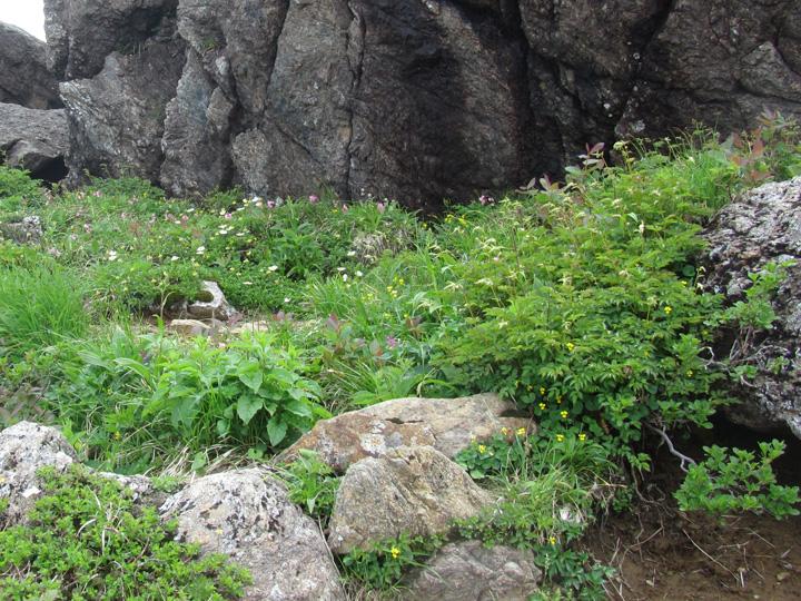 花園2.jpg