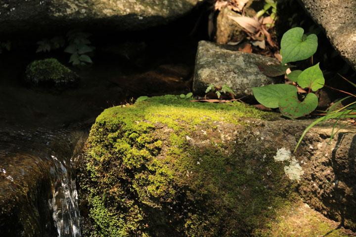 苔石とドクダミ.jpg