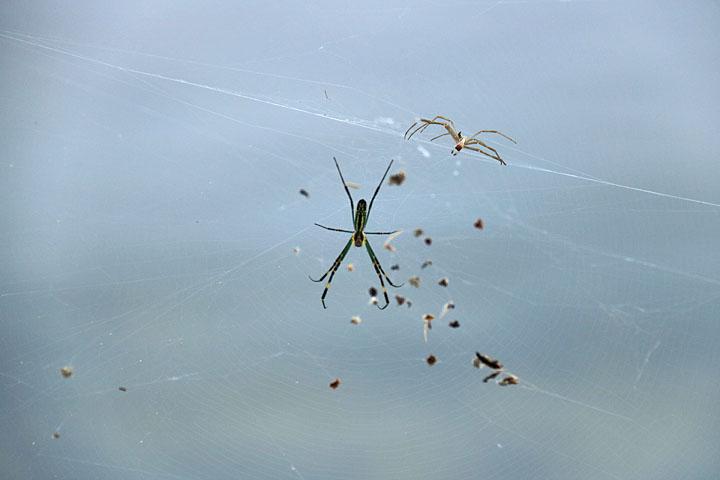 蜘蛛.jpg