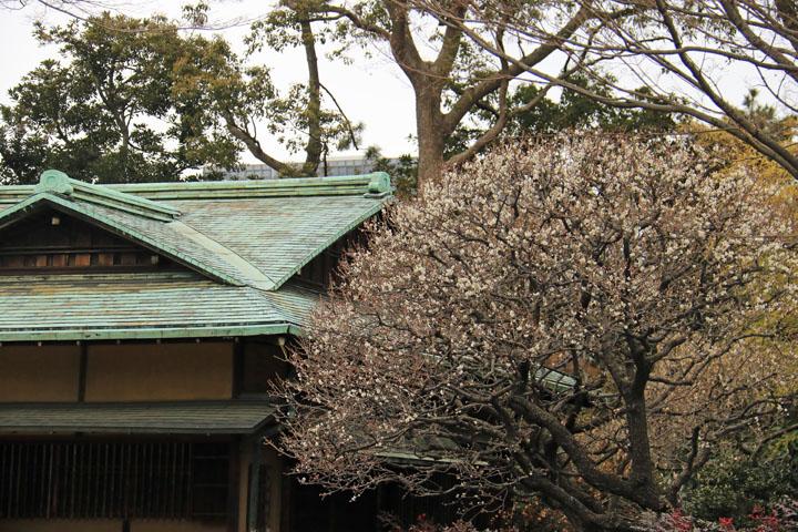 諏訪の茶屋と梅.jpg
