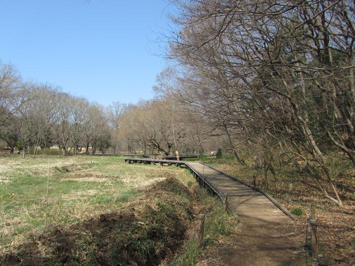 野川公園2.jpg