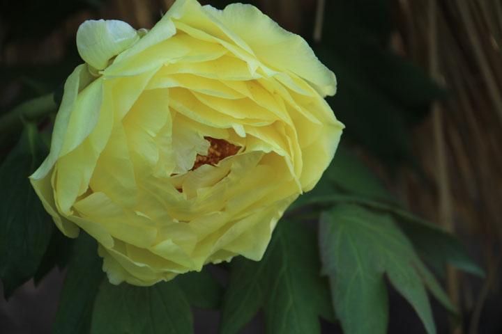 黄冠.jpg